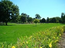 Mowed Grassy Area at Carpenter Park