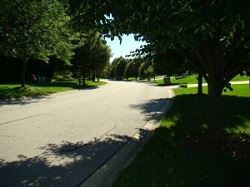 Roadway edged with trees and grass